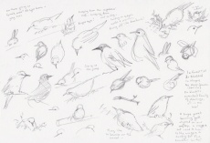 Garden birds - starlings plein air sketches (LR) ©2020 Carina Roberts Illustration